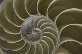 Биомимикрия